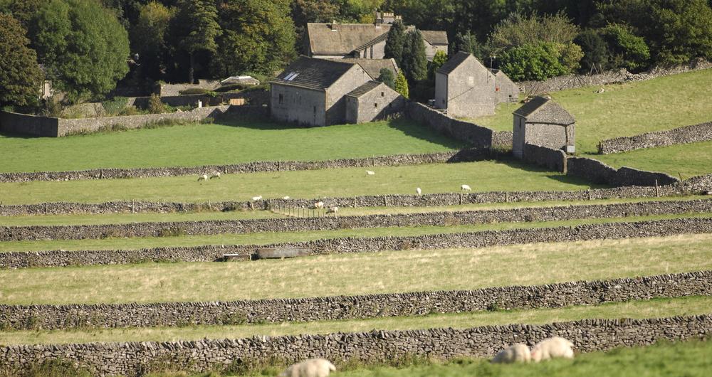 Sheep farming scene in Derbyshire's Peak District