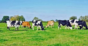 Funding support package for dairy farmers secured by NFU and industry-wide campaigning