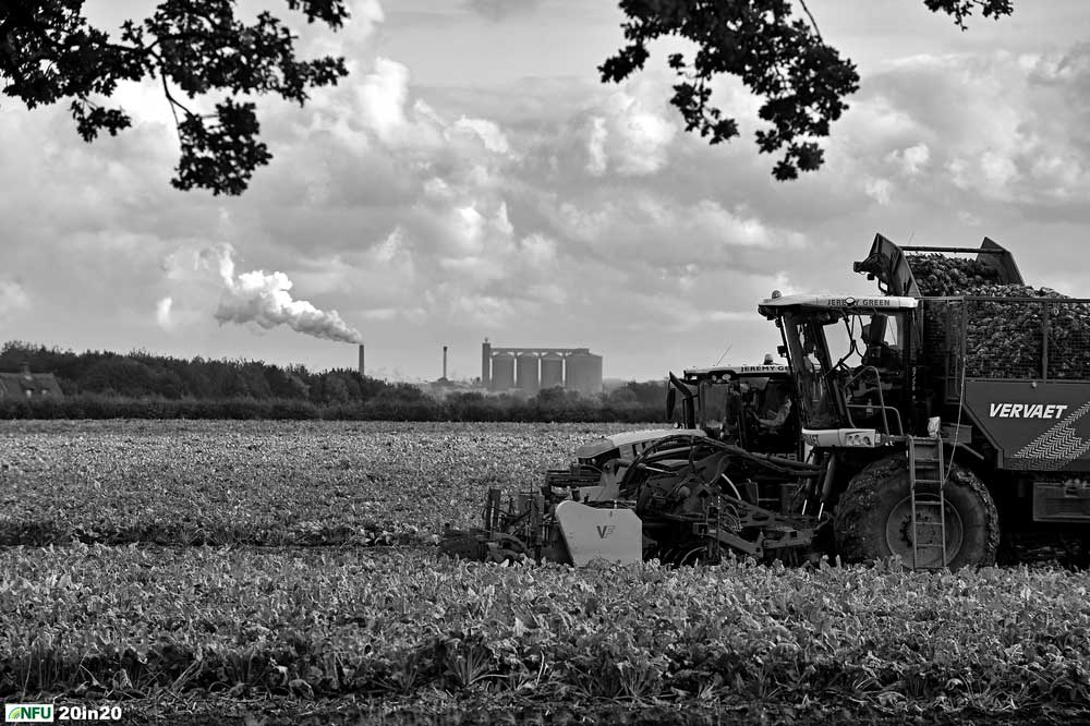 <h4>Harvesting sugar beet at Risby</h4> <p>Harvesting sugar beet at Risby, with British Sugar's Bury St Edmunds factory processing beet in the background. Around one in every seven bags of British sugar is produced in Suffolk. Photo: Nikon D4s + 80-200mm F2.8 (200mm) 1/1600 @ F9 ISO 400</p> <p>Warren's comments: <em>The brief was to get a beet harvesting shot with the factory in the background - sounds simple you might think. I spent a whole afternoon trying to find the best vantage points. While going along the A14 I noticed a field with good prospects. However, finding the farmer who owned and worked said field was more difficult than anticipated. Eventually my journalistic training took over. I decided to contact the parish council clerk. If anyone would know it would be them. Within 24 hours I had a name and a contact number. Even then, when I was told at short notice that the harvest was under way, I only had a window of one hour between booked jobs to get the shot.