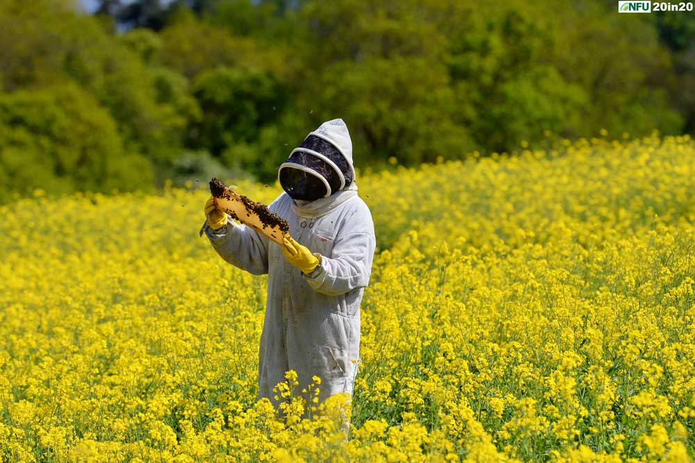 <h4>Bees among oilseed rape at Hillfarm Oils, Heveningham</h4><p>Beekeeper Arlen Mulder tends to the bees used as pollinators on the oilseed rape crop at Hillfarm Oils, Heveningham near Halesworth in May 2020. Photo: Nikon D4 + 300mm F2.8 1/1600 @ F8 ISO 250</p><p>Warren's comments: <em>Speaking to Sam Fairs at Hillfarm Oils, I was wary of producing the stereotypical deep blue sky, deep yellow rape seed flower image. I jumped at the chance to visit the farm when the beekeeper was there maintaining the hives - it gave me something different to work with. I also found out how protective the bees can be with their hives. After being continually bumped by tenacious bees for the fifth time, I called it a day and retreated to my car.</em></p>