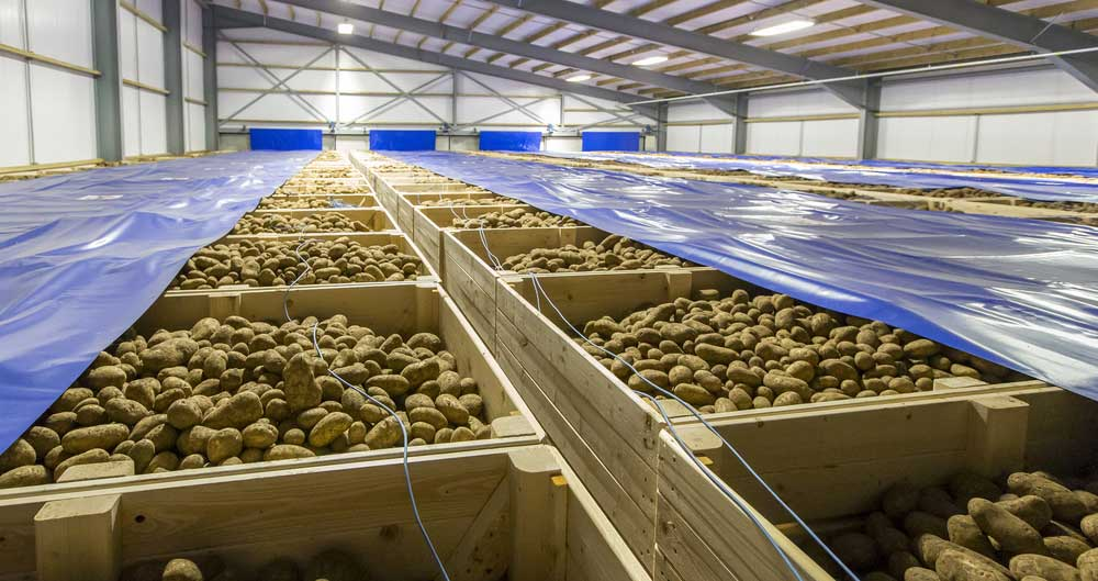 AHDB potato portal expanded for non-human consumption customers