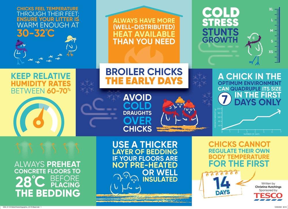 Christina Hutchings and Tesco: Broiler infographic