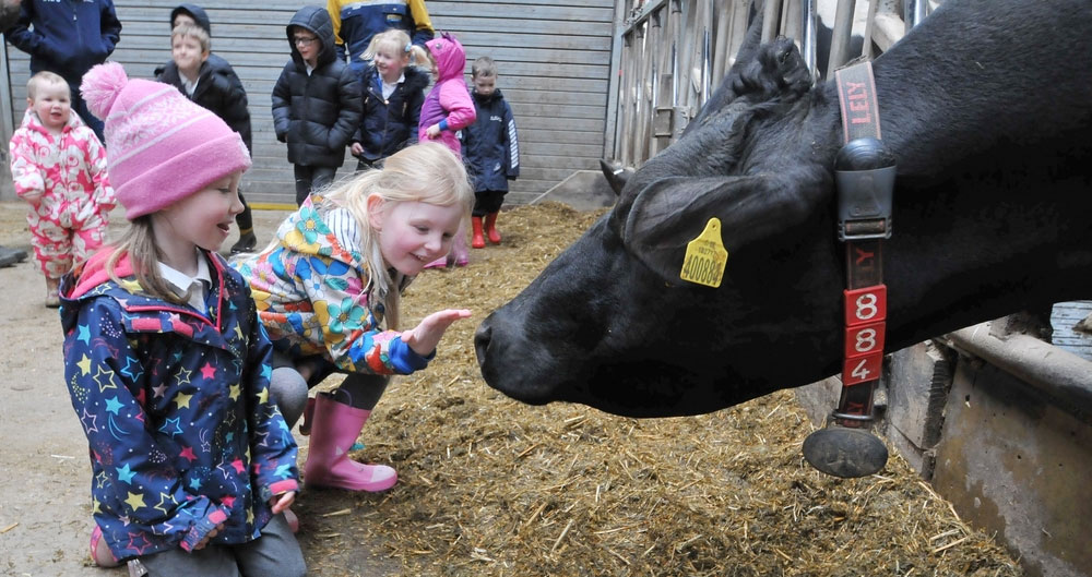 Settle Primary School pupils Lexi Cokell and Amber Crook meeting a dairy cow on a farm visit