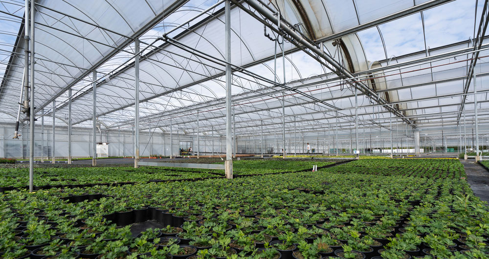 Glasshouse growers reminded of changes to rules around boilers and generators