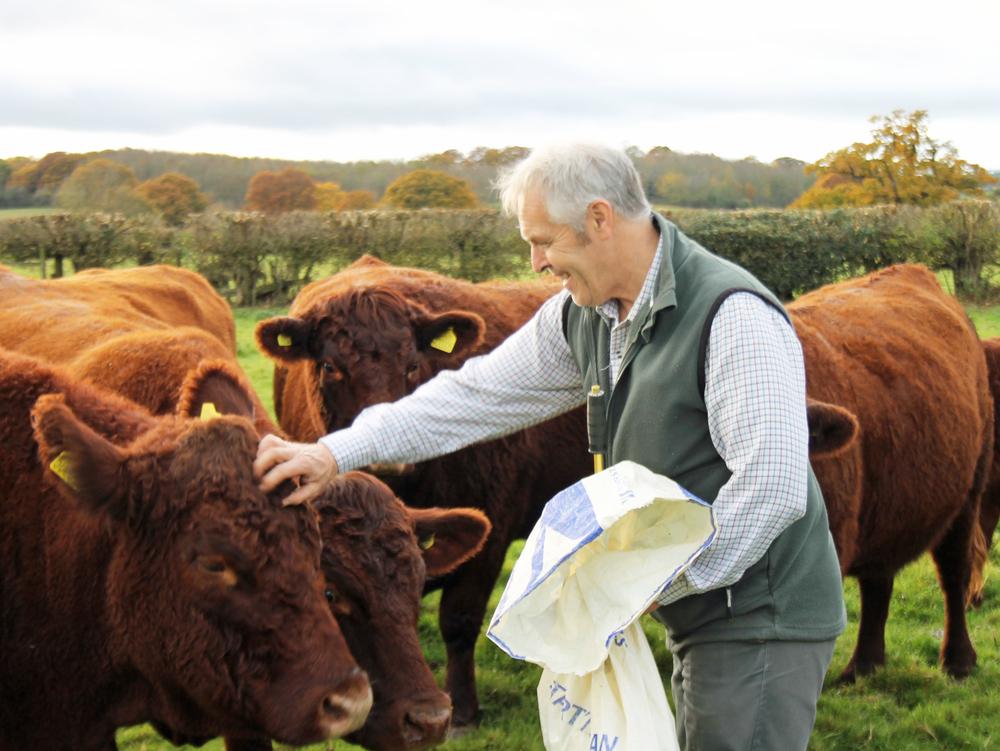 Farmer Rob Alderson with some of his Devon cattle