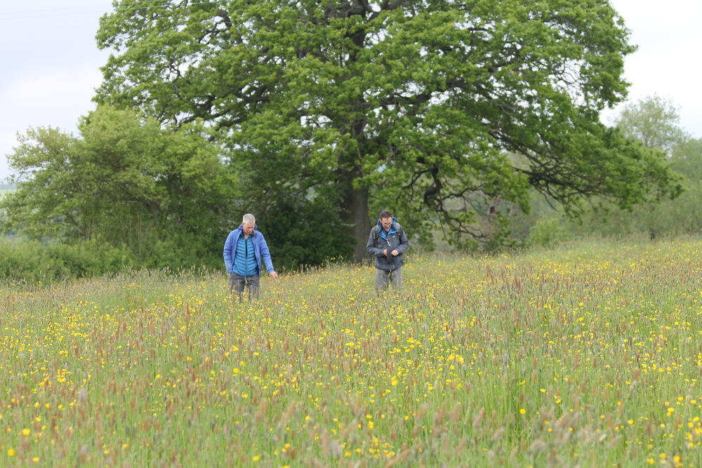 Botanists in a meadow at the Farm Nature Discovery Day, Onibury, 2019, Rob Alderson