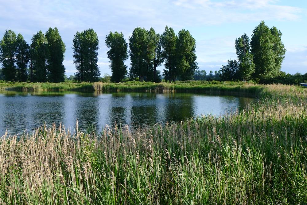 A norfolk reservoir