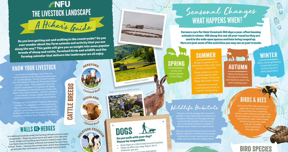 A poster showing common livestock breeds, livestock farming activity through the year and information on wildlife, birds and plants commonly found in the livestock landscape