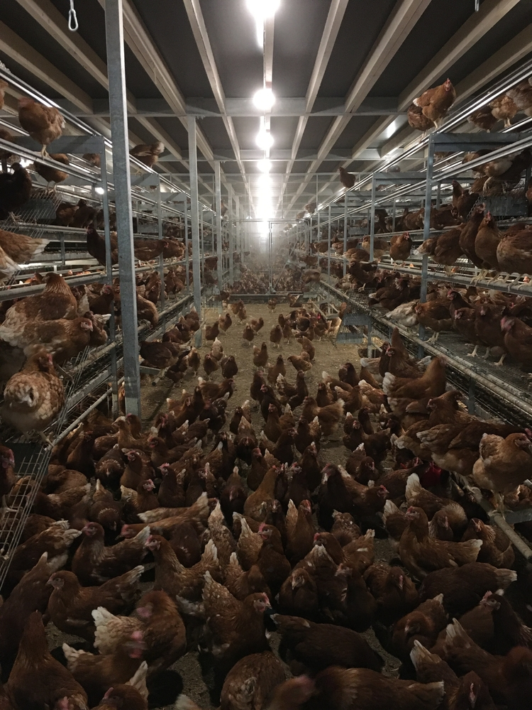 PIP blog for March 2021 Poultry