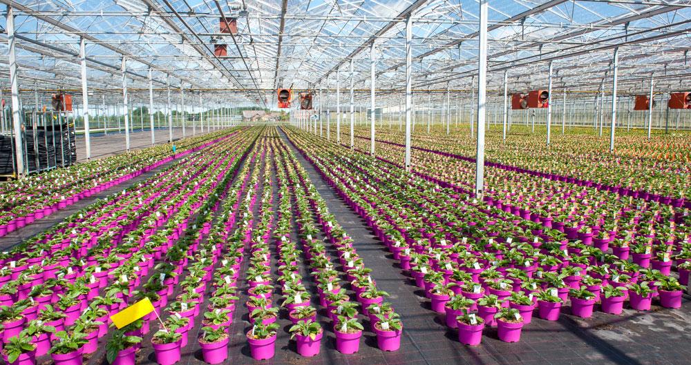 Flower Farmers' Big Weekend