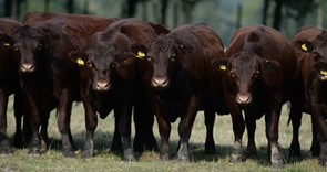 NFU expresses disappointment with government move on bTB no-cull zones