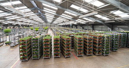 NFU continues to work with industry as government rules out financial support for ornamentals