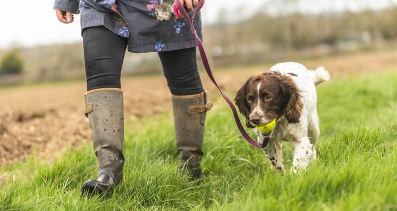 Keep your dog and livestock safe when walking in the countryside