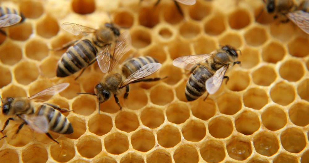 Buzz from the beehive: What it's like to keep bees throughout the year