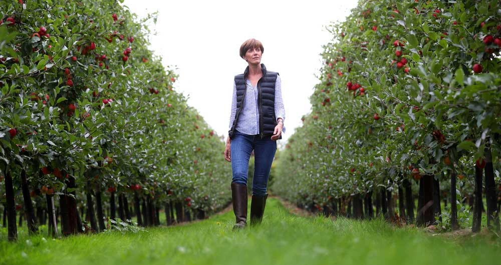 Ali Capper, fruit and hops grower, looks at the future of the British horticulture sector