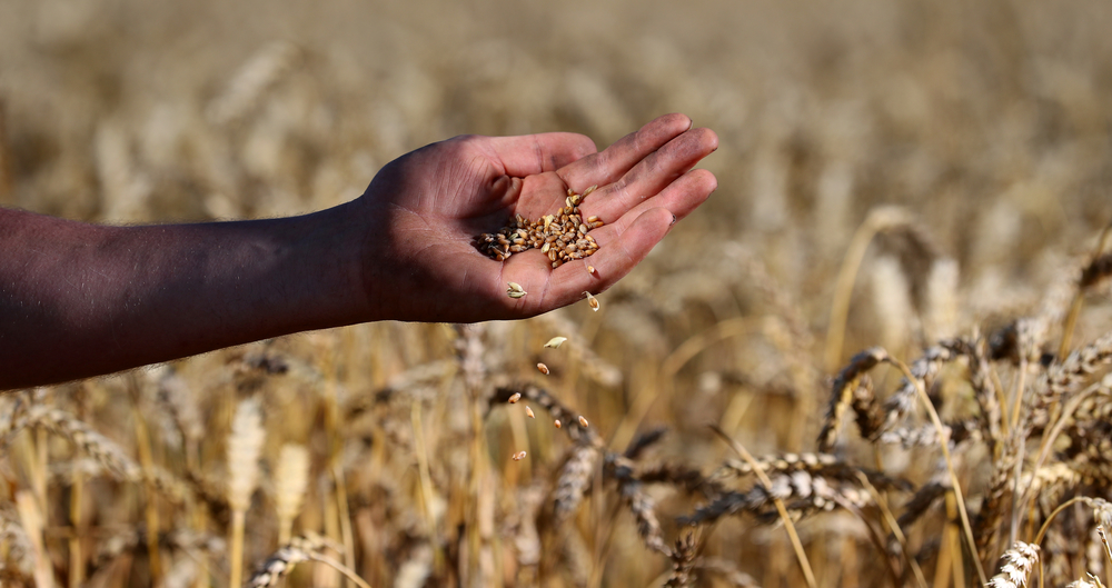Farmers offer a helping hand on climate change
